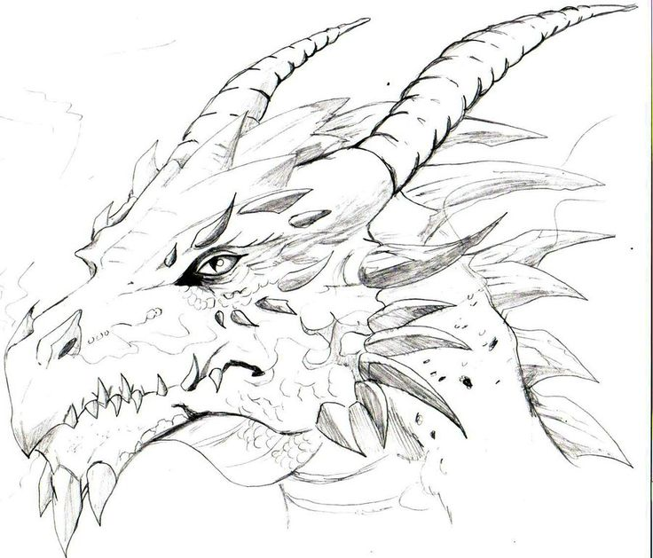 Drawings of a dragons head sketches of dragons heads for Cool detailed drawings