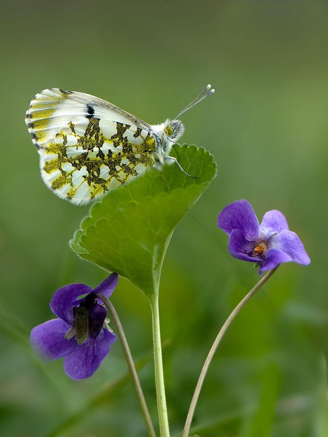 What an amazing wing pattern. So beautiful.