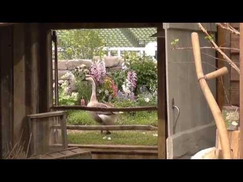▶ ターシャ・テューダー 庭と動物たち~国際バラとガーデニングショウ2013~ Tasha Tudor garden & animals~ - YouTube