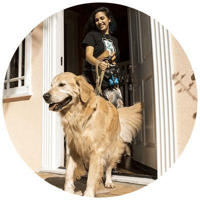 private dog walker