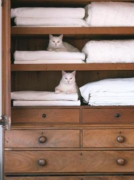 Antique armoire for linens are you sure...looks like a cattery.   And the cats are white too.  How cute!  lol