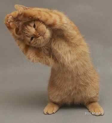 Фото картинки смешные животные :: Прикольные и смешные фотографии животных: кошек и собак