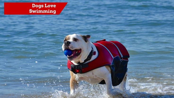 1000 Images About Dog Beaches In California On Pinterest