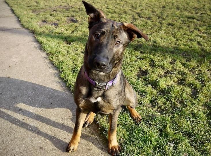 Della Find A Pet Rspca Org Uk Pets Animals Dogs