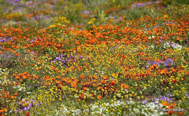 Garies, Namaqualand, Northern Cape, South Africa, August 2007, by Martin Heigan.