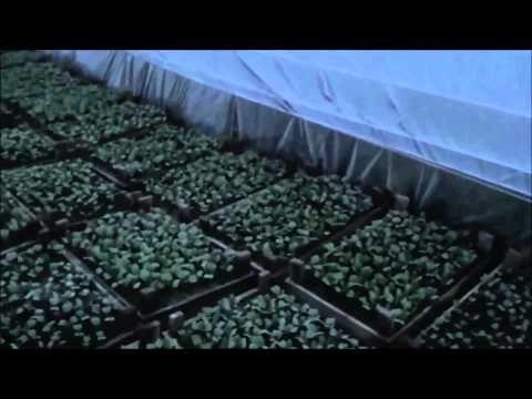 АТ32 Простой способ зарабатывать на Калифорнийских червях и попутно вырастить овощи на продажу - YouTube