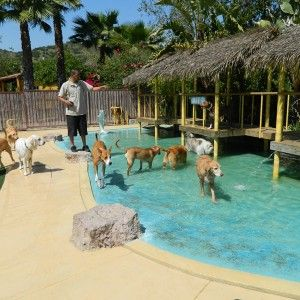196 best dog boarding kennels images on pinterest dog for Dog hotels in los angeles