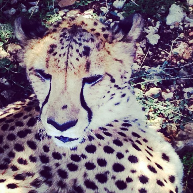 KFM's Ground Patrol and Lead SA visit Inverdoorn and learn about Cape Cheetah and RhnioProtect.