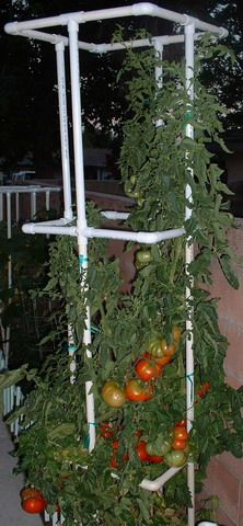 PVC tomato cages....need to replace the junky useless wire ones!