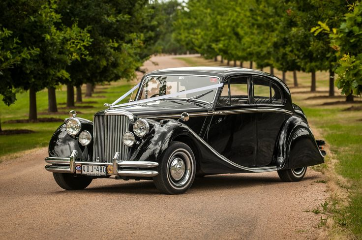 One of our Classic Black Jaguar Mk5 Sedans at Stones of the Yarra Valley www.tripler.com.au  #weddingcars #weddingcarsmelbourne #jaguar #tripler #stonesoftheyarravalley #stones #yarravalley #winery #wedding #classic