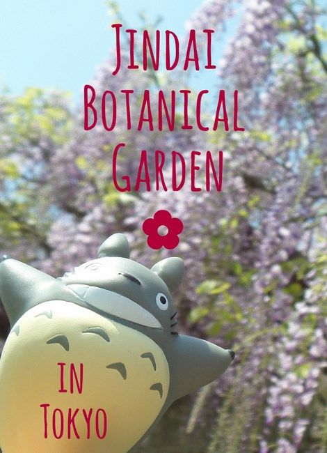 Are you into Are you into ✿ Garden Tourism ✿ ? Jindai Botanical Garden, which is located only 30 minutes by train from Tokyo Shinjuku Station is a must-see place when visiting Japan, especially during the sakura, peony, wisteria and rose season! Plan your perfect Tokyo trip and don't miss this off of beaten path tourist spot :)