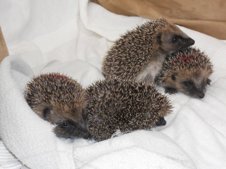 Joan shows me autumn juvenilles who will be cared for over the winter and then released when they are big enough to survive in the wild