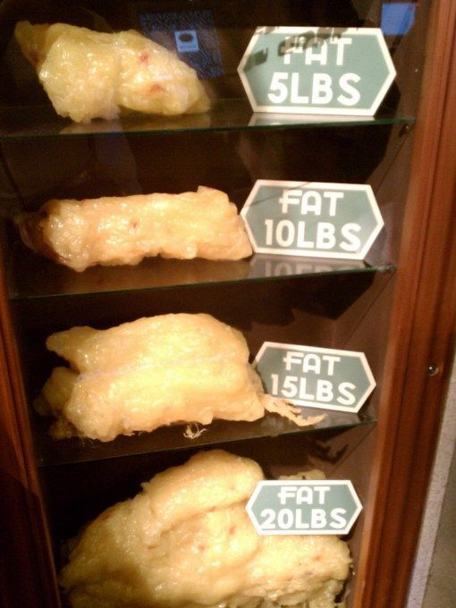 Ten Pounds Of Fat 82