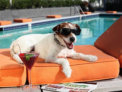 Once a homeless shelter dog, Uggie starred in movies & now there's a book about his rags-to-riches story!