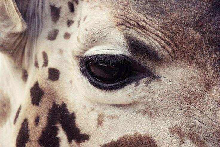 O espanhol Oscar Ciutat foi ao zoológico de Barcelona para registrar o sentimento por trás dos olhos que estão do outro lado da jaula.