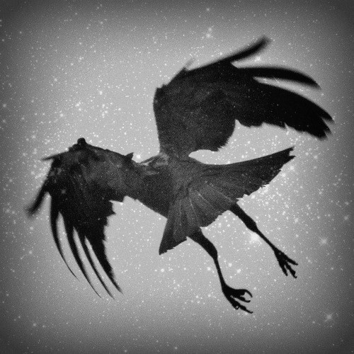 In Irish mythology, crows are associated with Morrigan, the goddess of war and death.