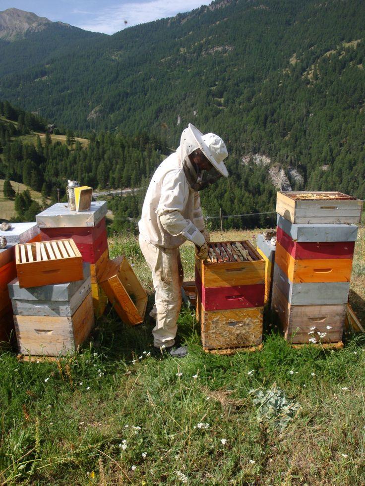 Les 25 meilleures id es de la cat gorie apiculteur sur for Porte parole en anglais