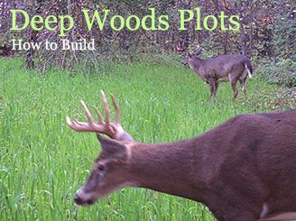 Spring and summer Food Plots?