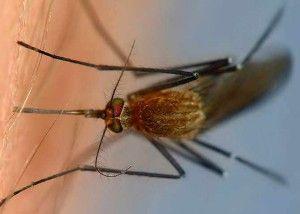 как избавиться от укуса комара