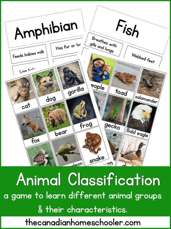 25+ best ideas about Animal classification activity on Pinterest ...