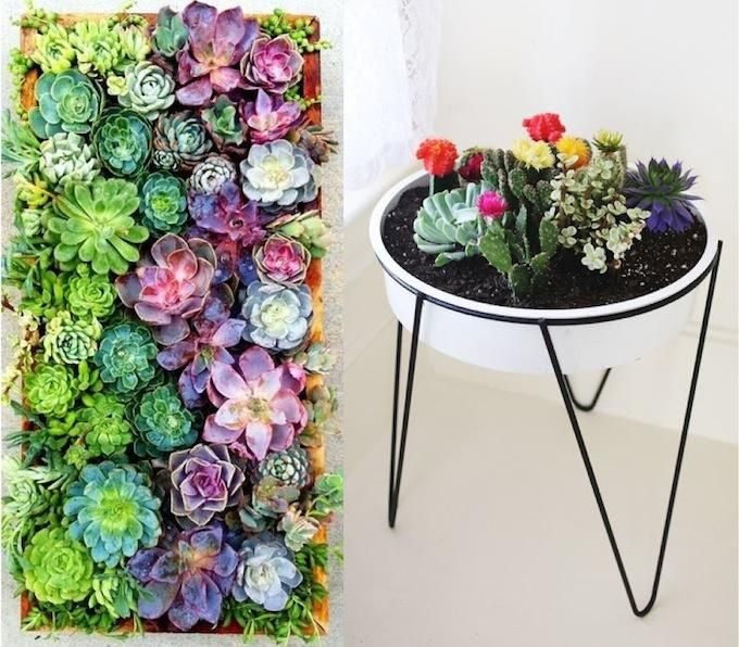 22 best images about succelently sexy on pinterest for Indoor succulent wall