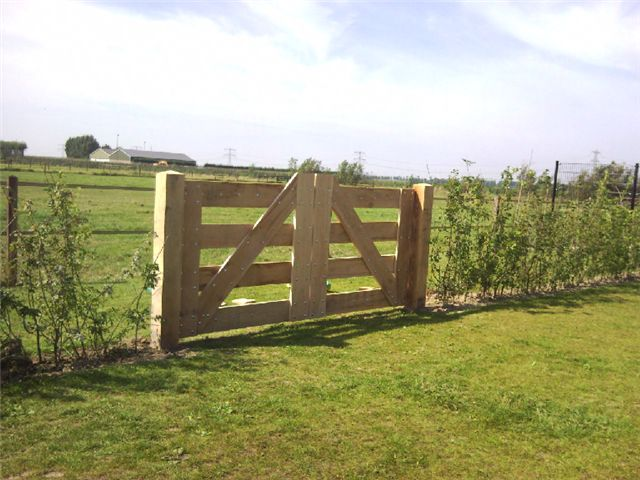 Raspberry on fence?