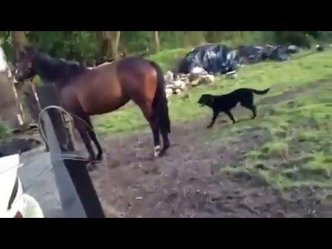 Paard en asielhond worden beste vrienden (video) | Startpunthonden