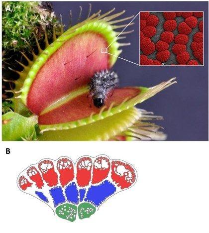 Las plantas carnívoras explotan sus defensas para comer insectos                                                                                                                                                                                 Más