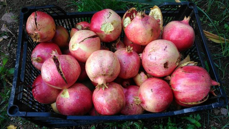 What to eat and drink in the Lecrin Valley  Farmers markets  The Pomegranate