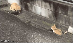 Cats GIF - Find & Share on GIPHY