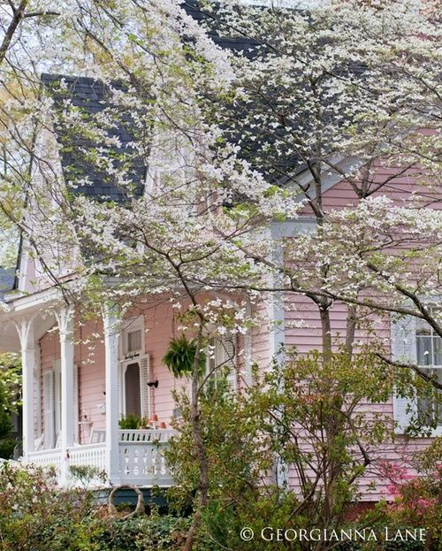 pink house in spring