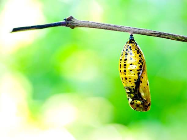 Προσωπική μεταμόρφωση μέσω του Transformational Coaching
