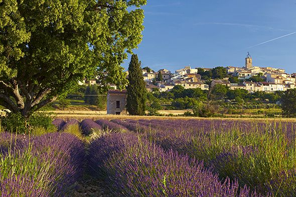 """Lavender Fields Forever: The Belles of Provence :: Let our """"Girlie Guides"""" take YOU to this magical region, filled with food, wine, history, art, and everything that makes a good trip GREAT! JLazoff@traveldetailing.com or 410.517.2266 gets you in touch! #girlsgetaways #traveldetailing"""