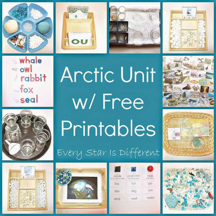 Every Star Is Different: Arctic Unit w/ Free Printables