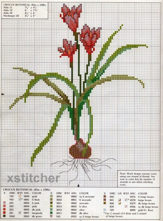 crocus botanical