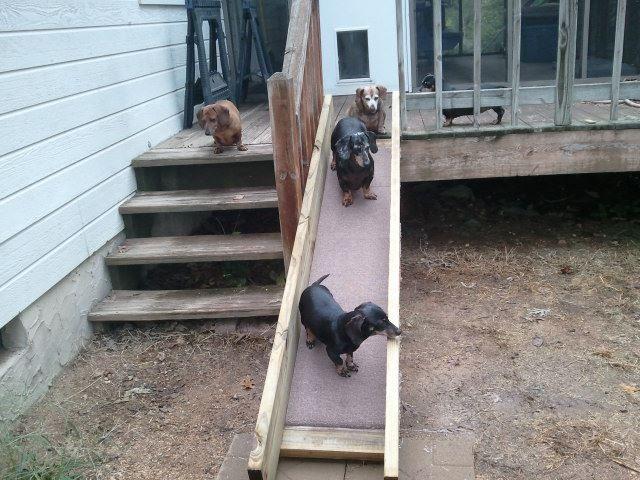 This is a ramp I built for my babies. - photo via Sara Vroegindewey --> I love Dachshunds fb page