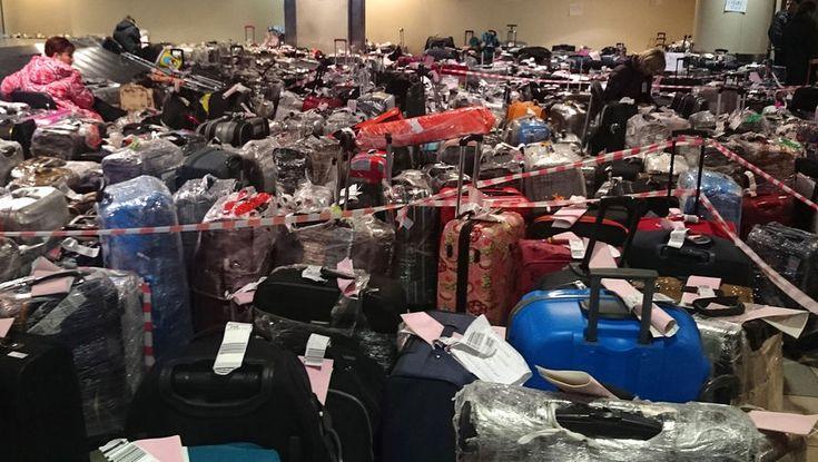 Тонны багажа туристов из Египта скопились в Домодедово