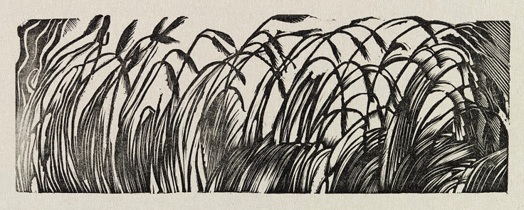 Grasses, 1930s, Eric Ravilious, wood engraving, England