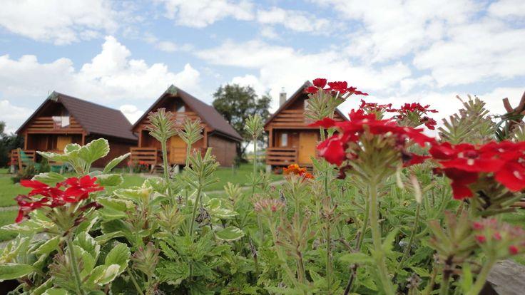 Kolorowe kwiaty w ośrodku wczasowym http://www.domkiwbeskidach.pl/domek-w-gorach.html