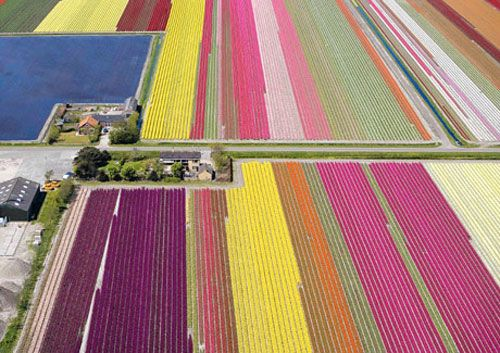 It's tulip time in the Netherlands!: Tulip Fields, Buckets Lists, Tulip Gardens, Color, Holland, The Netherlands, Amazing View, Dutch, Flower Fields