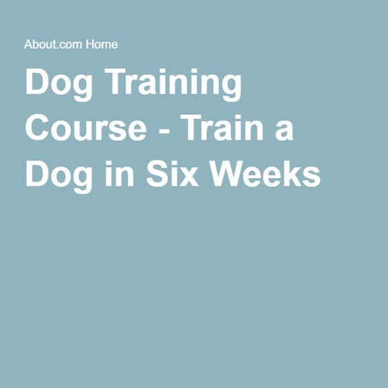 Follow This Great Article About Dogs To Help You ** Learn more by visiting the image link. #dogsandpuppies
