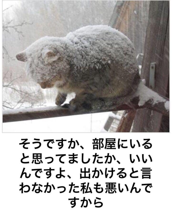 ボケて:ボケ云々ではなく寒そう。というかこの右前足・・・よくやる。なんで身体に雪積もるんだ。場所変えなかったのか謎。