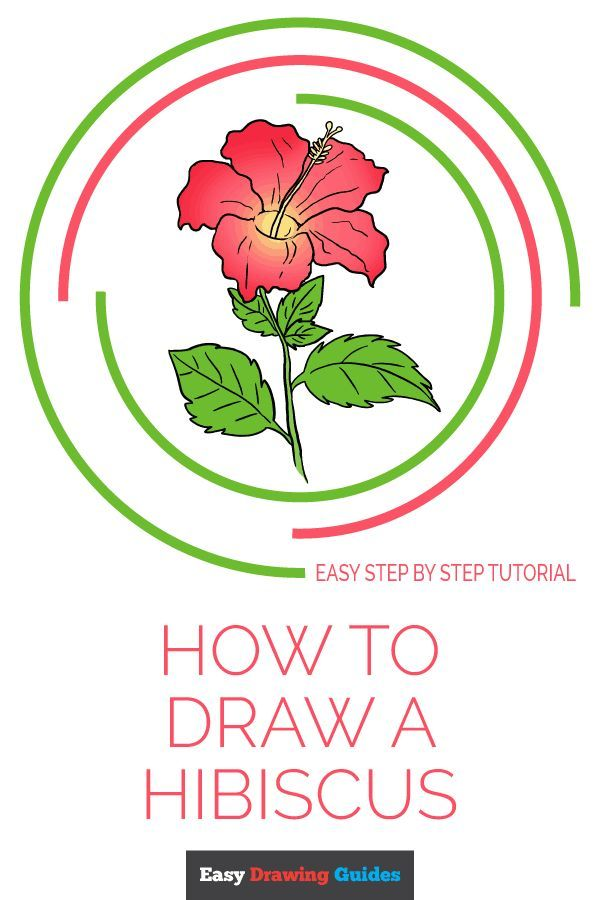 How To Draw A Hibiscus Easy Drawings Flower Drawing Tutorials