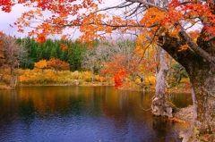 山形県東田川郡庄内町にある鶴巻池  月山北部で幻想的な風景がみることができるのがここ 紅葉が水面にうつりこみ最高の写真スポットとしても知られています 雄大な自然をたっぷり堪能し冷えた体には美味しい料理と温泉 月の沢温泉は山形県内には3カ所あるとされる酸性泉の一つで皮膚疾患に効くといわれている温泉ですぜひお立ち寄りを  tags[山形県]