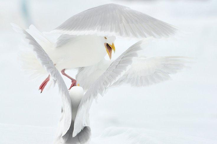 Najlepsze z najlepszych. Zwycięskie zdjęcia z DZIEWIĘCIU konkursów fotograficznych National Geographic Polska