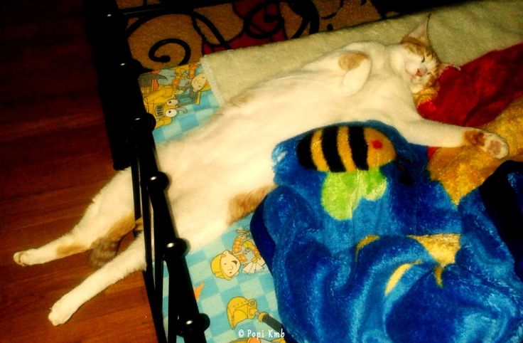 My cat Max! by Popi Kmb