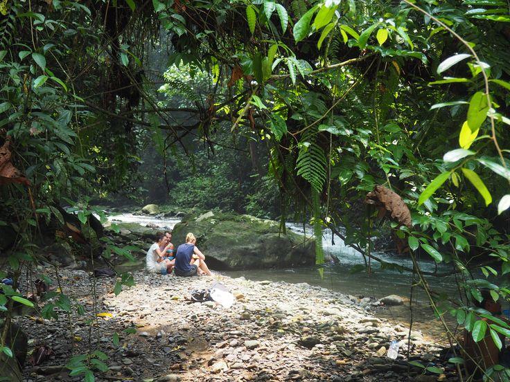 Gunung Leuser National Park, Northern Sumatra - 5 day jungle trek to observe and monitor wild orang-utan populations