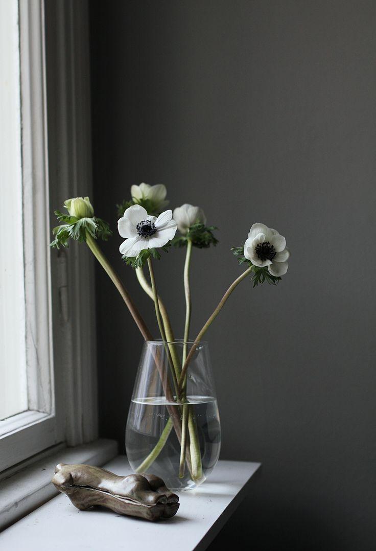 * f l o w e r s * white anemone