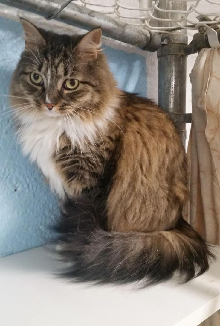 Pin... Kittens Near Me For Sale Craigslist D Cute cats