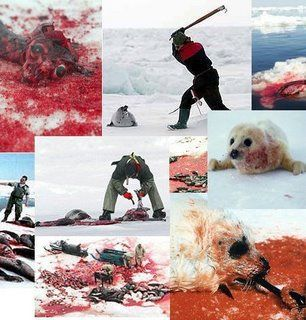 Las dos caras de Noruega, Matanza de ballenas, caza de focas, OTAN, Jens Stoltenberg, tecnología de guerra, armamento, Misiles